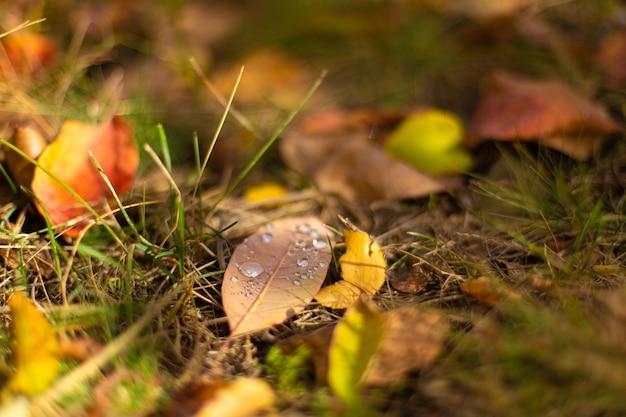 Herbstliche farbnuancen. gefallene blätter in verschiedenen farben auf dem gras im park.