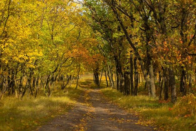 Herbstliche farbnuancen. wald in leuchtenden herbstfarben.