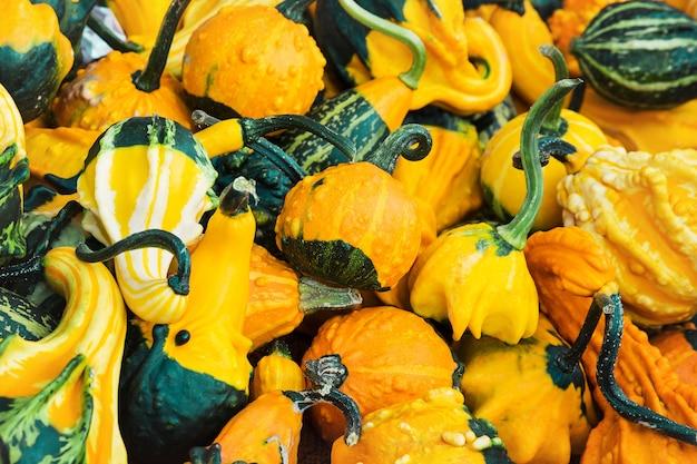 Herbstliche kürbisse, ernte. getönt