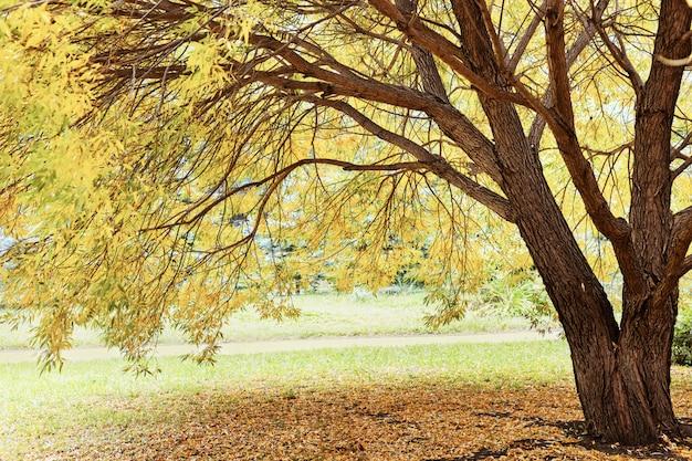 Herbstliche landschaft. gelbe blätter auf weide. baumstamm.