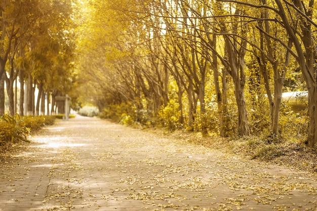 Herbstliche landschaft mit trockenen blättern auf dem bürgersteig