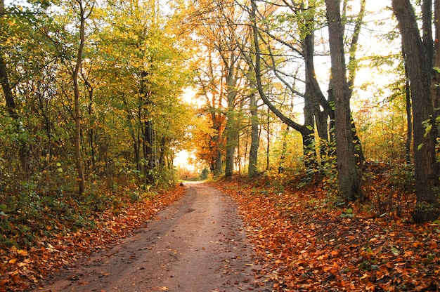 Herbstliche landschaft mit trockenen blättern