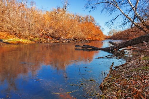 Herbstliche landschaft. see, wald, umgestürzte bäume, buntes laub