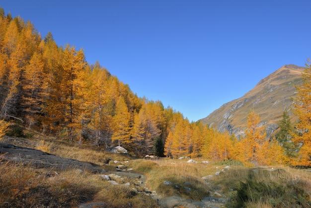 Herbstliche laubbäume in einem schönen alpinen berg unter blauem himmel