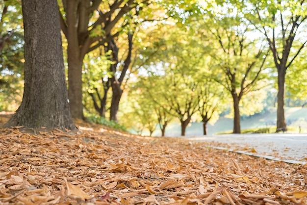 Herbstliche straße. straße mit gefallenen blättern im herbst.