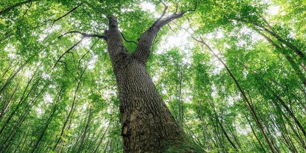 Herbstliche waldbäume. natur grünes holz sonnenlicht hintergründe.