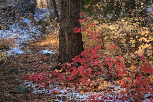 Herbstliche waldblätter