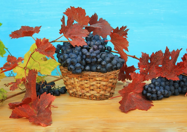 Herbstliche weinlese. bündel dunkle trauben mit den rot- und gelbblättern und -rebe auf einem holztisch auf blau