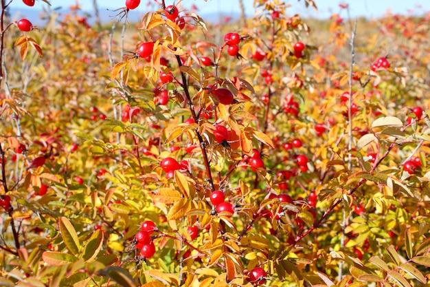 Herbstlicher busch von