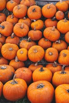 Herbstlicher hintergrund des kürbises mit vielen kürbisen. nahaufnahme