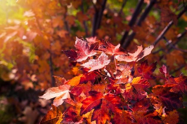 Herbstlicher hintergrund des parks