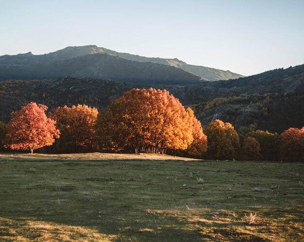 Herbstlicher majestätischer alleinbuchenbaum mit sonnigen strahlen am gebirgstal. bunte morgenszene. rote und gelbe herbstblätter. im wald.