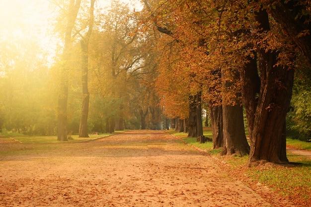 Herbstlicher wald.