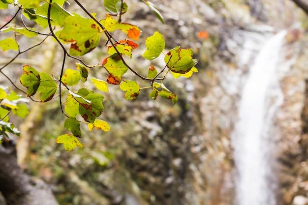 Herbstlicher wasserfall mit felsen und blättern im troodos-gebirge in zypern