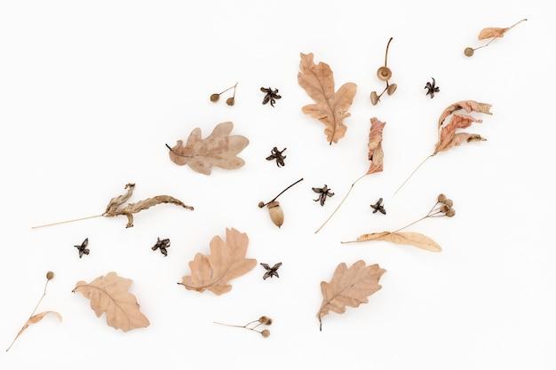 Herbstliches blasses muster, trockene eichenblätter, eicheln auf weiß