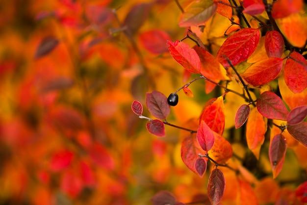 Herbstliches blumenmuster mit blättern in den jahreszeitenfarben.