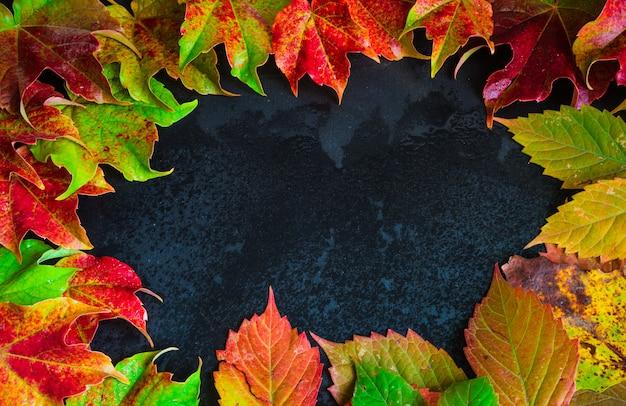 Herbstliches konzept mit hellem rot lässt feld auf schwarzem hintergrund