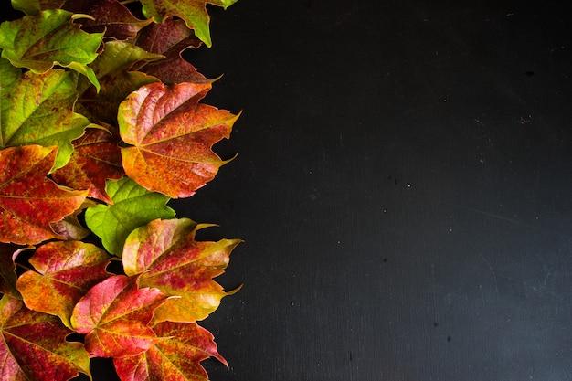Herbstliches konzept mit hellem rot verlässt auf schwarzem hintergrund