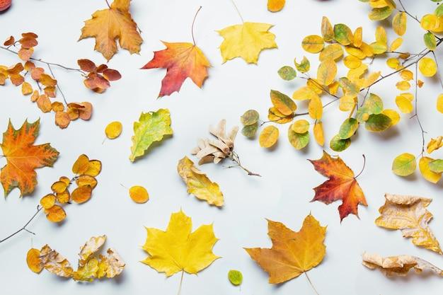 Herbstmuster von bunten gefallenen blättern auf grauem hintergrund