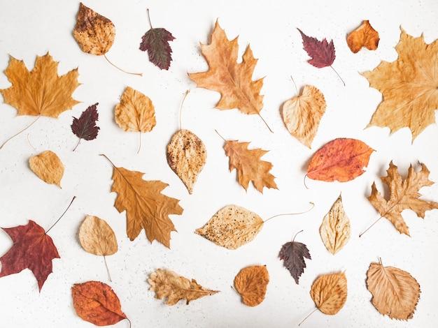 Herbstmuster von verschiedenen gefallenen bunten blättern von verschiedenen bäumen auf weißem texturhintergrund. flache lage der botanischen sammlung fallen blätter, draufsicht.