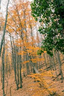 Herbstnatur-landschaftsbäume in einem wald