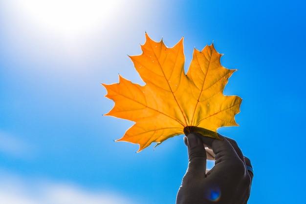 Herbstorange ahornblatt in der hand gegen blauen himmel