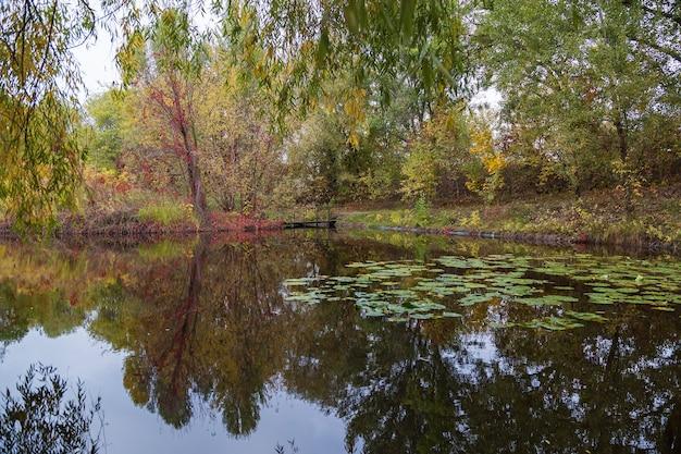 Herbstpark. bäume spiegeln sich im wasser des sees im park