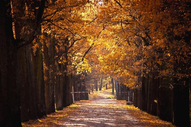 Herbstpark bei klarem wetter. goldener herbst. herbst im park. gelbes laub.