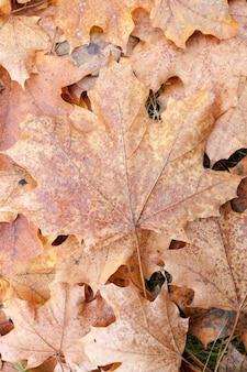 Herbstpark, bewölkt - ein park im herbst, bei bewölktem wetter, spätherbst,