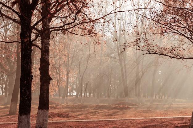 Herbstpark, in dem blätter verbrannt werden. kohlenwasserstoffverschmutzung