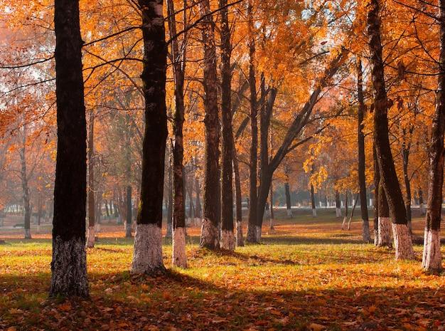 Herbstpark mit sonnenlicht