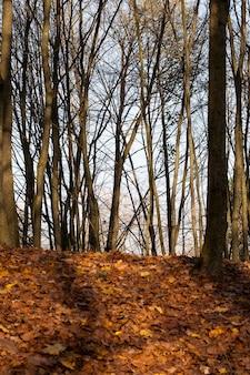 Herbstpark mit umgestürzten blättern von laubbäumen, herbstlandschaft bei sonnigem wetter