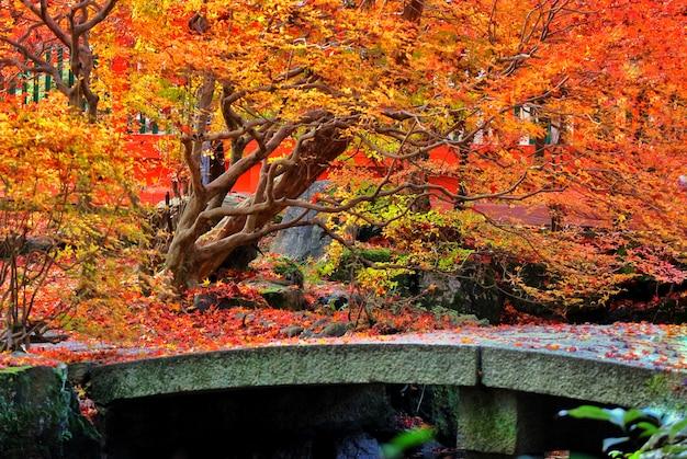 Herbstrot-ahornblattbaum im japanischen tempelgarten