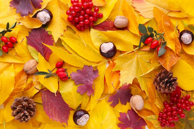 Herbstrot und orangenblätter mit beeren