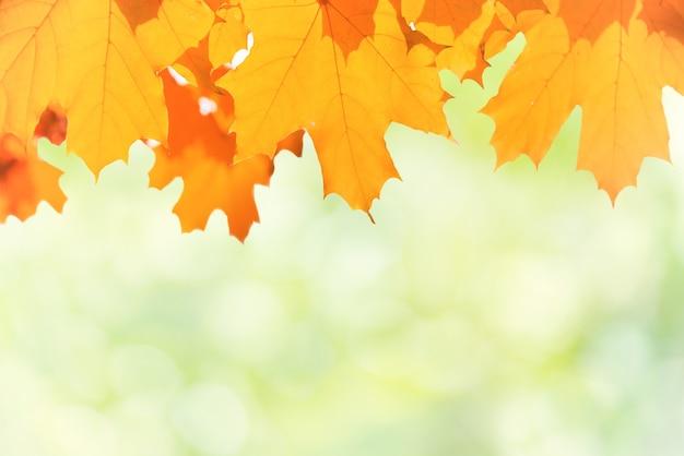 Herbstrote und gelbe ahornblätter auf sonnigem hintergrund der unschärfe