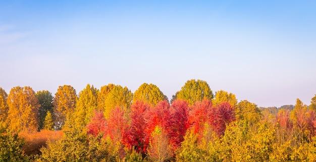 Herbstsaison mit blauem himmel und tollem tageslicht