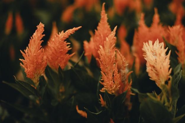 Herbstsaisonale exotische orangefarbene blumen wachsen auf dem feld hintergrund für herbstgrußkarten