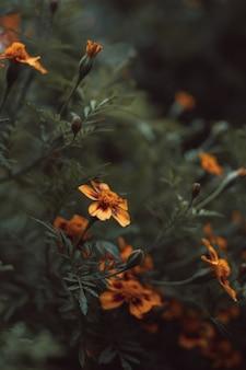 Herbstsaisonale gelb-orange live-blume, die im garten wächst hintergrund für grußpostkarten