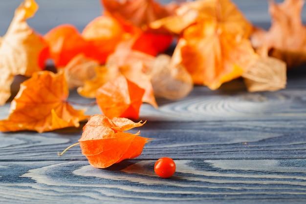 Herbstsimbols, phisalys auf dem blauen holzhintergrund