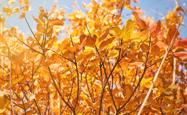 Herbststadtpark mit vergilbten blättern auf den bäumen in der sonne, tag