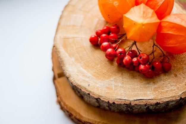 Herbststillleben. ebereschenbeeren und physalis auf dem baumstumpf