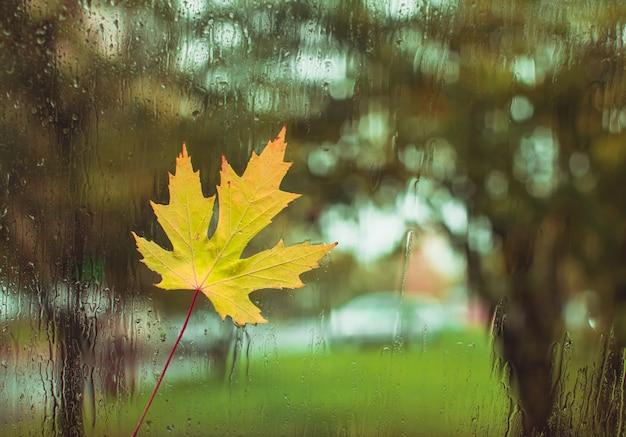 Herbsttag, regentropfen am fenster mit dem festgeklebten ahornblatt