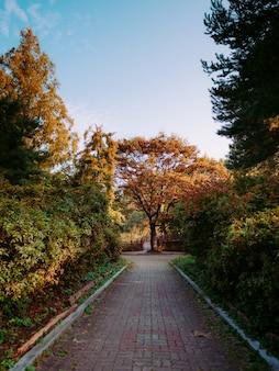 Herbsttal mit büschen und gelben fallbäumen