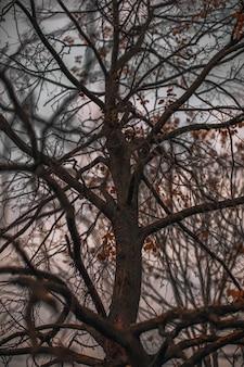 Herbsttrockene äste vor dem hintergrund des abendhimmels