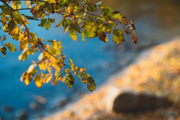 Herbstufer in der nähe des wassers in der nähe des bootes