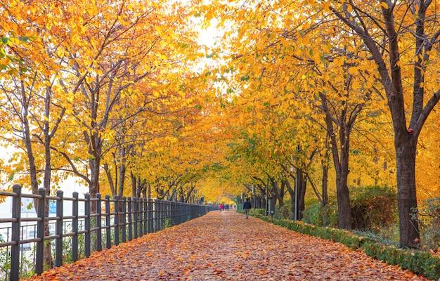 Herbsturlaub und herbst seoul südkorea