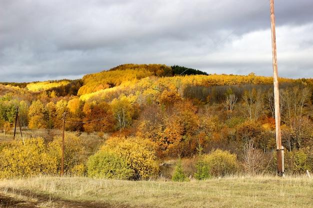 Herbstwald am nachmittag