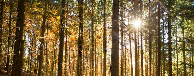 Herbstwald am sonnigen tag
