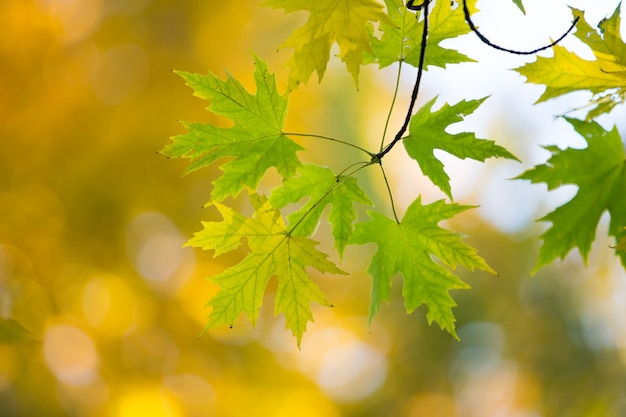 Herbstwald an einem sonnigen tag. herbstblatt