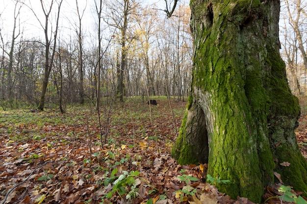 Herbstwald bei bewölktem wetter, triste bäume trüben farben, mitte oder ende des herbstes